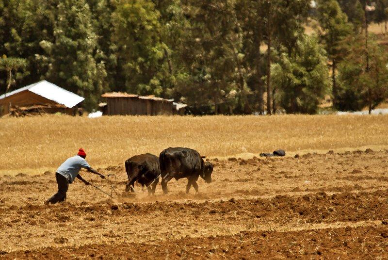 large_Ploughing_1.jpg