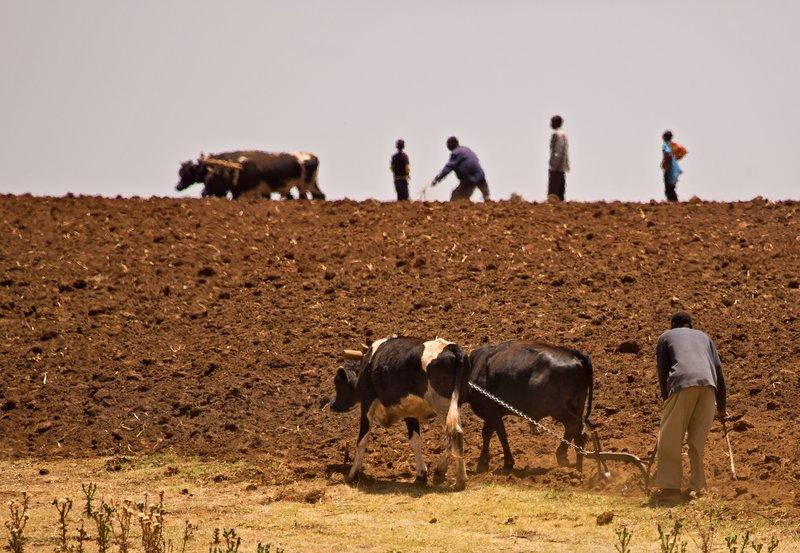 large_Ploughing_2.jpg