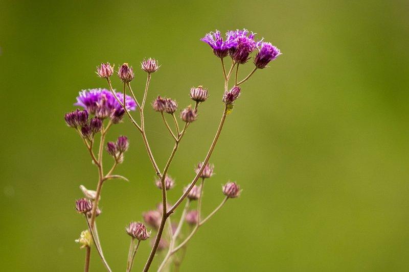 large_Purple_Flowers_1.jpg
