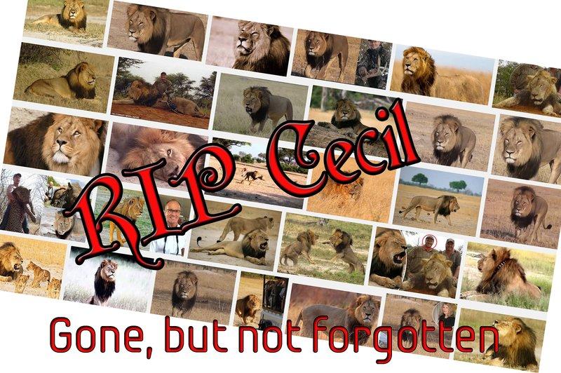 large_RIP_Cecil.jpg