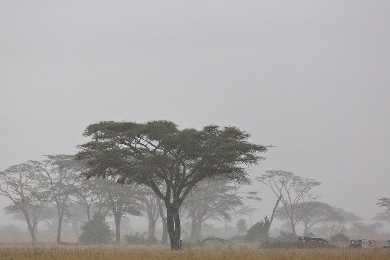 large_Rain_and_Mist_11-1.jpg