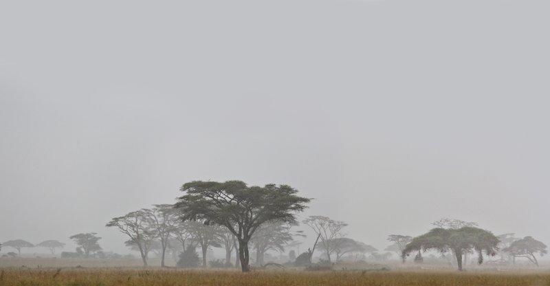large_Rain_and_Mist_11-6.jpg