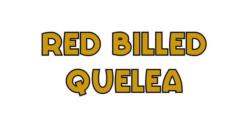 large_Red_Billed_Quelea.jpg