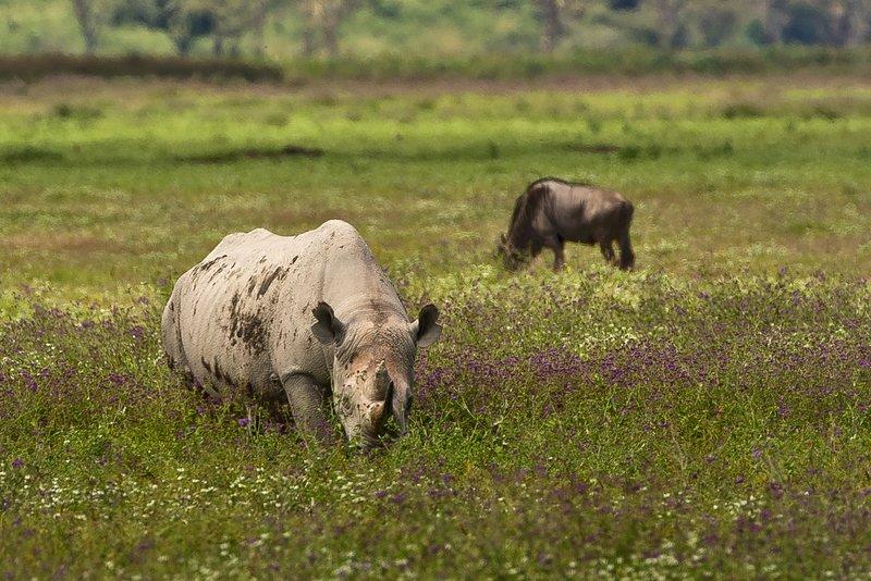 large_Rhino_33.jpg
