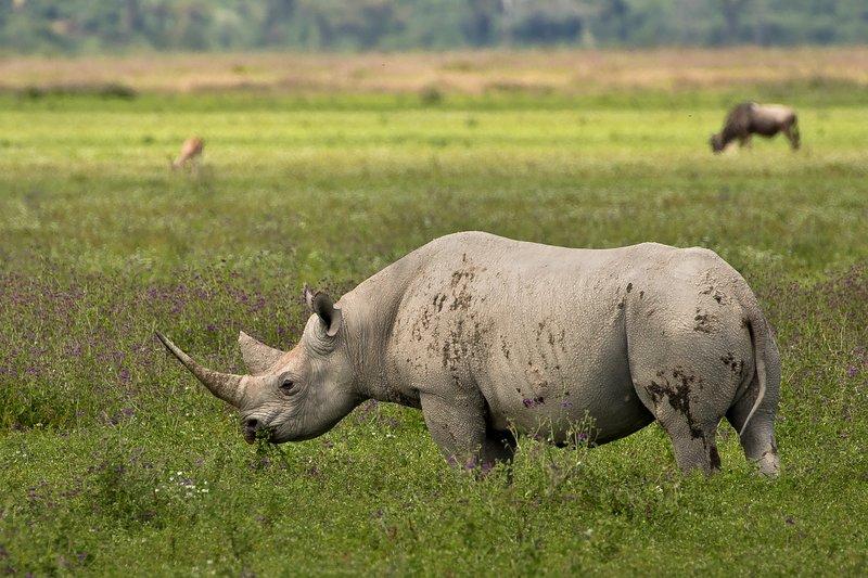 large_Rhino_36.jpg