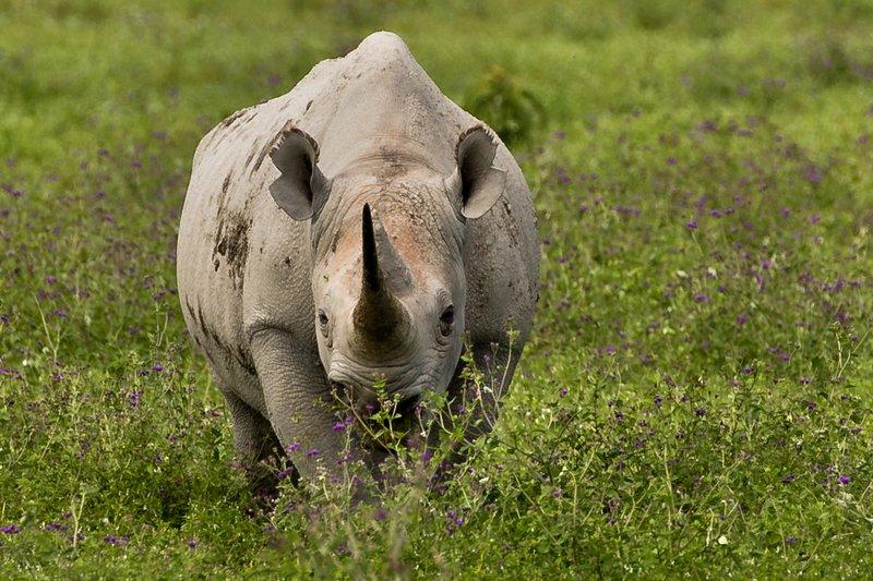 large_Rhino_40.jpg