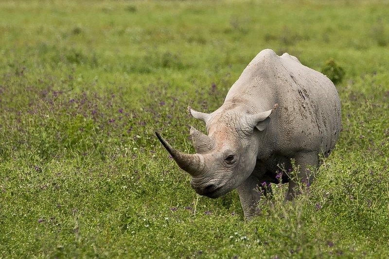 large_Rhino_41.jpg
