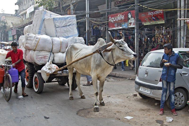 large_Rickshaw_R..ni_Chowk_13.jpg