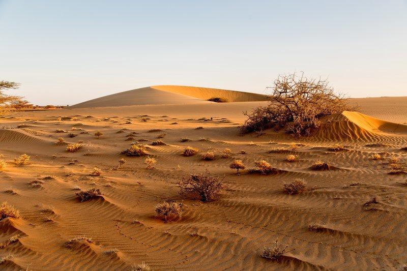 large_Ruso_Sand_Dune_50.jpg