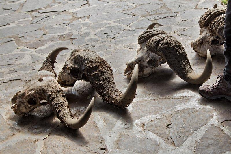 large_Serengeti_..Skulls_11-1.jpg