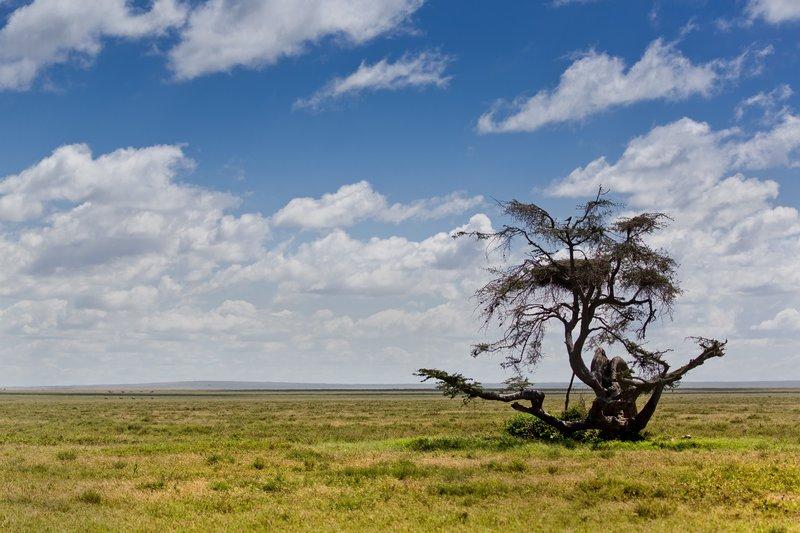 large_Serengeti_..al_Park_9-1.jpg