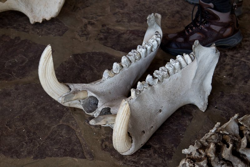large_Serengeti_..po_Jaw_11-1.jpg