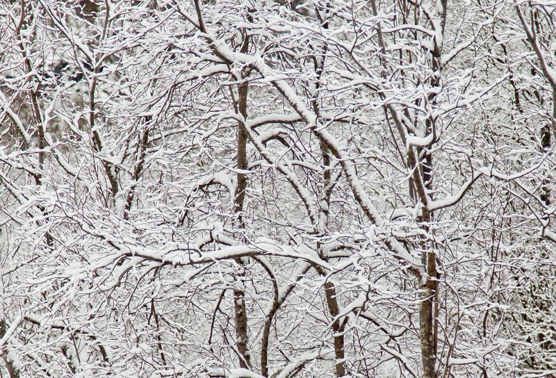 large_Snowy_Branches_7.jpg
