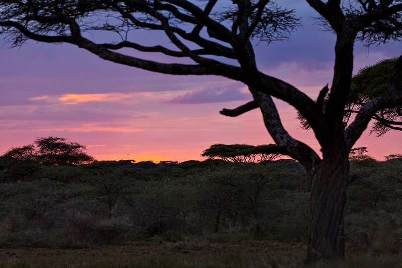 large_Sunset_Over_Ndutu_72.jpg
