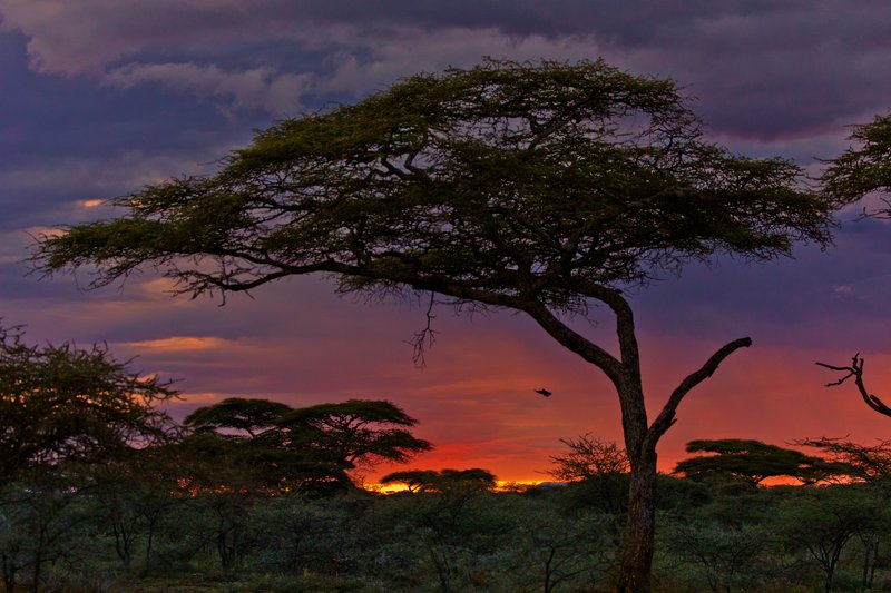 large_Sunset_Over_Ndutu_73.jpg