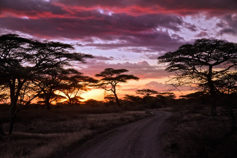 large_Sunset_in_Ndutu_8-16.jpg