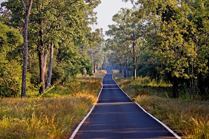 large_Tadoba_National_park_2A.jpg