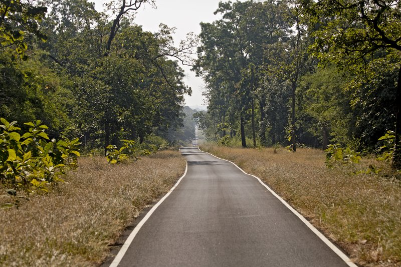 large_Tadoba_National_park_5.jpg
