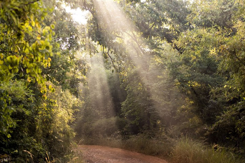 large_Tadoba_National_park_91.jpg