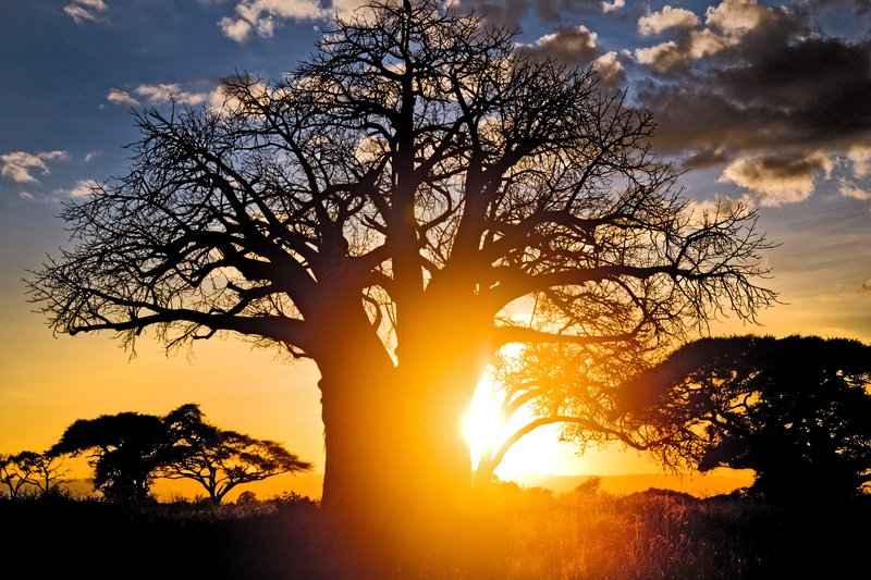 large_Tarangire_Sunset_2016___5.jpg