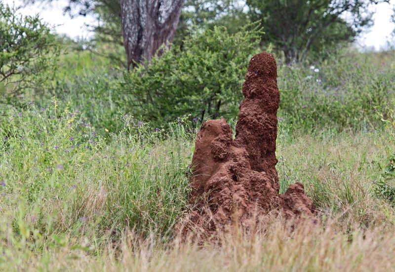 large_Termite_Mound_5-1.jpg