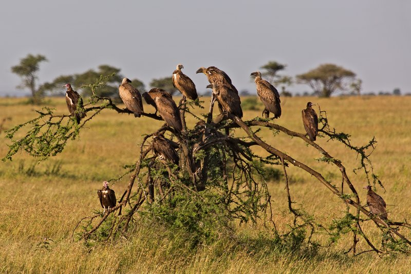 large_Vulture_Tree_10-1.jpg