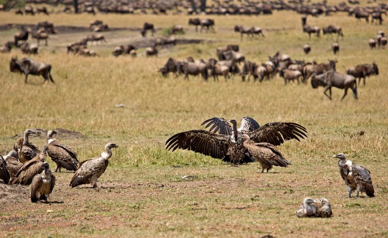 large_Vultures_1.jpg