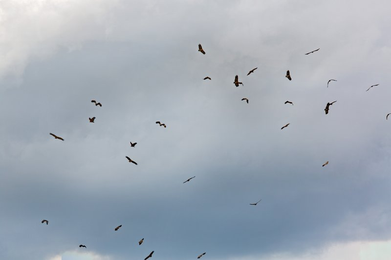 large_Vultures_Circling_10-1.jpg
