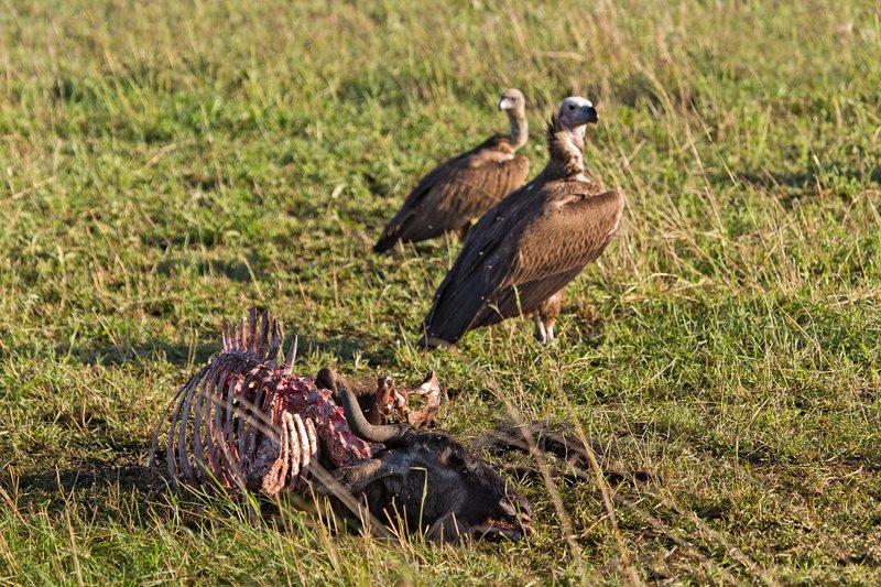 large_Vultures__..Backed_10-2.jpg