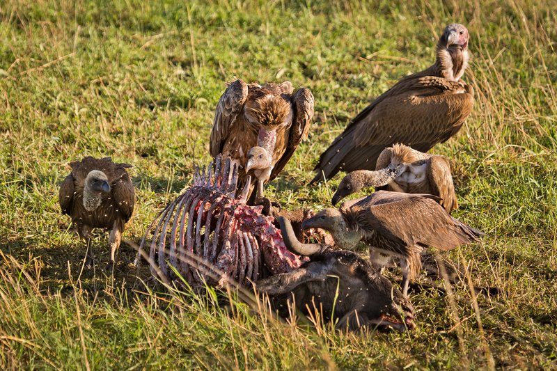 large_Vultures__..Backed_10-5.jpg