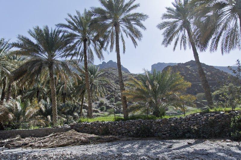 large_Wadi_Bani_Awf_56.jpg