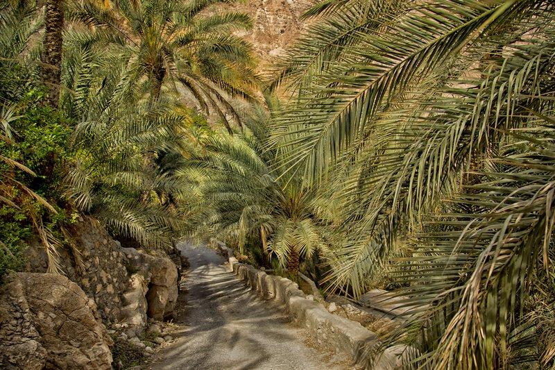 large_Wadi_Tiwi_26.jpg