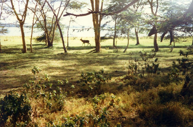 large_Waterbuck_..sland___017.jpg