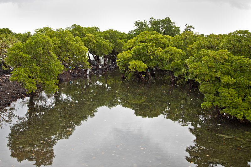 large_West_Coast_Mangroves_1.jpg