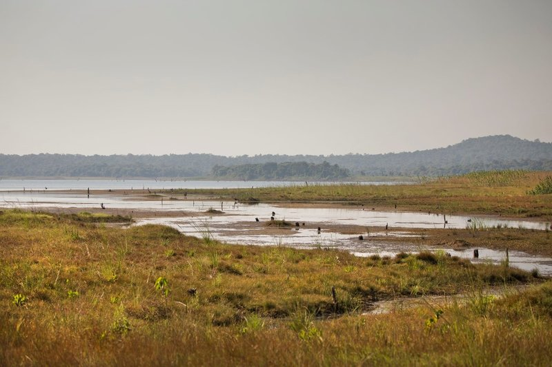 large_Wetlands_101A.jpg
