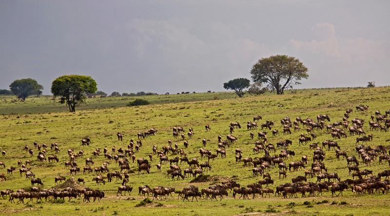 large_Wildebeest_Migration_1.jpg