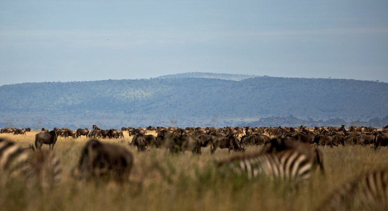 large_Wildebeest_Migration_201.jpg