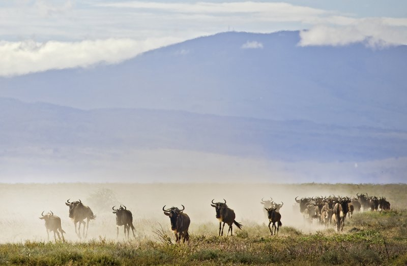 large_Wildebeest_Migration_9.jpg