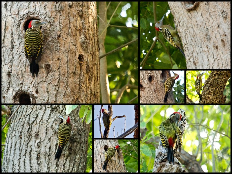 large_Woodpecker_Combo.jpg