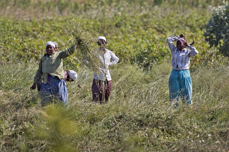 large_Workers_in_the_Field_101.jpg