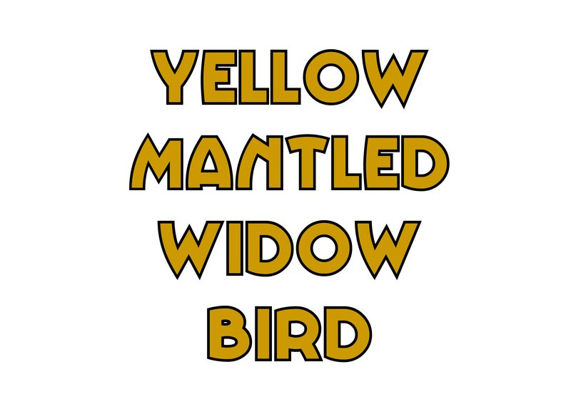 large_Yellow_Mantled_Widow_Bird.jpg