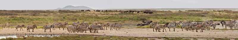 large_Zebra_at_H..Valley_8-11.jpg