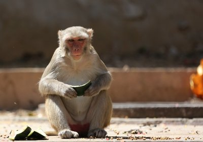 monkey_temple_3.jpg