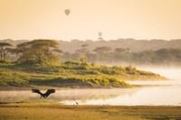 Stork, Marabou, in the Sunrise, Ndutu 9
