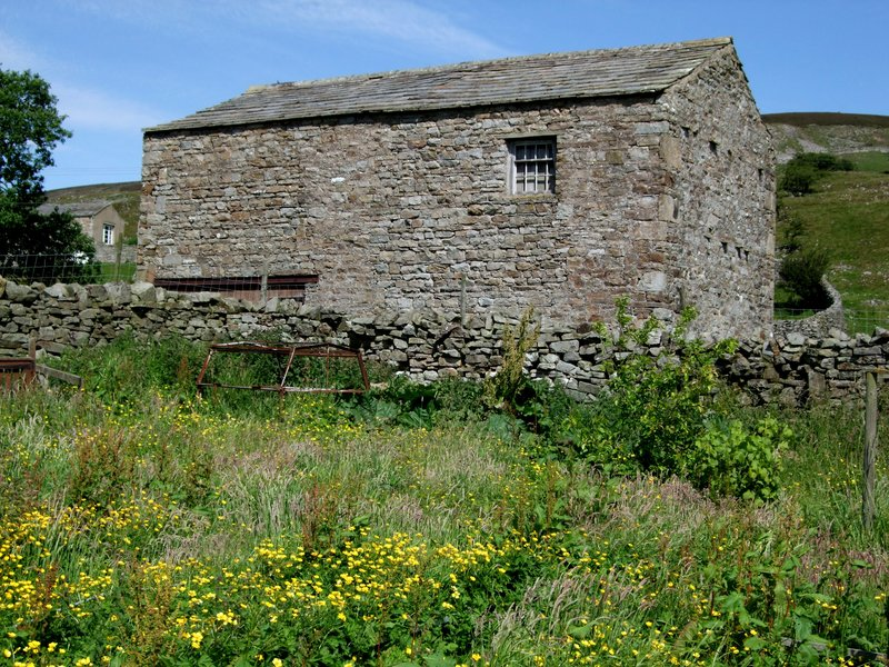 Barn and wild hay meadow, Yorkshire Dales