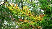 Green fades to autumn