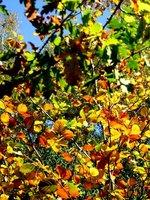 Autumn on the Common
