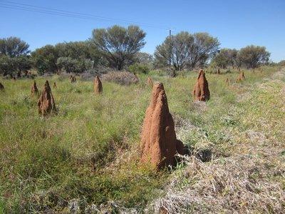 Termite_Nests.jpg