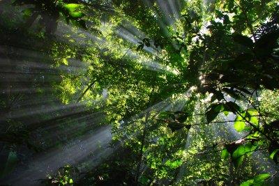 Coffee smoke through the trees