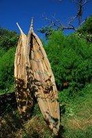 Papyrus Boats